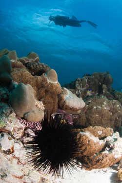 Im Urlaub auf den Seychellen die Unterwasserwelt erkunden.