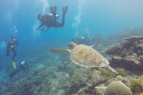 Tauchen Seychellen mit Schildröten