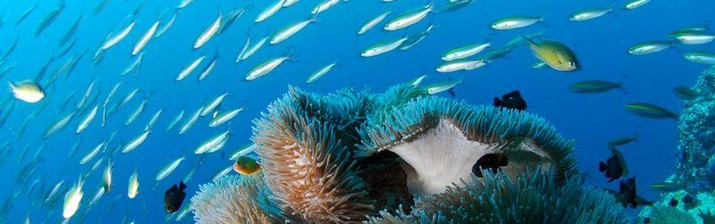 Seychellen tauchen im Urlaub